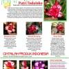 Katalog bunga tumpuk terbaru 2010