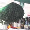 Balon Pelepasan Peresmian