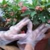 SARUNG TANGAN PLASTIK - HAND GLOVES