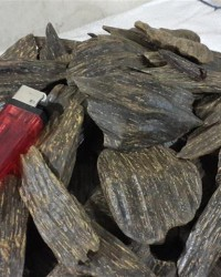 Industrial Agarwood Sanai CP Nat